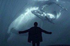 Синий кит – что это такое и как защитить ребёнка от опасных игр